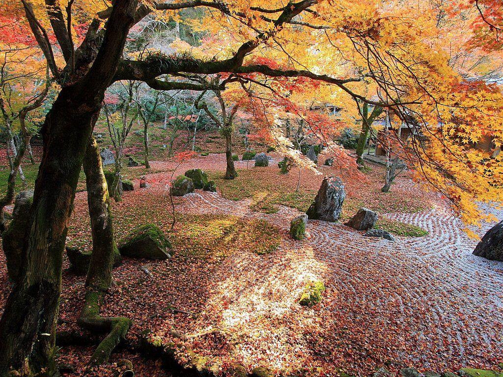 福岡観光 紅葉
